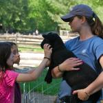 Caring for Animals at Camp